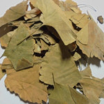 Гингко-билоба (лист)